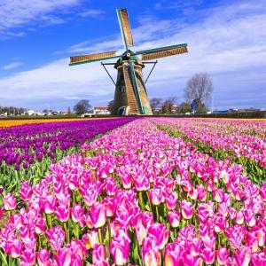Höhepunkte in Holland: Köln - Amsterdam - Ijsselmeer - Köln mit der MS Aurelia