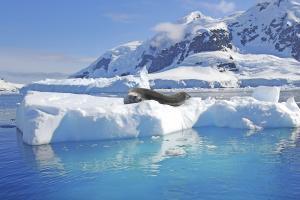 MS WORLD EXPLORER: Antarctic Express