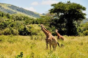 Südafrika & paradiesische Inselträume: Kapstadt - Kap der Guten Hoffnung - Port Elizabeth - Durban - Richards Bay - Port d'Ehola - Madagaskar - Port Louis mit der MS Artania